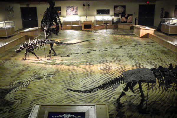 Dinosaur Discovery Gallery